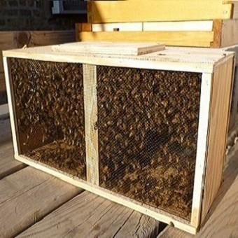 roi de albine la pachet